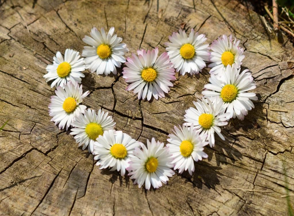 love-heart-flowers-spring-36470-Pixabay