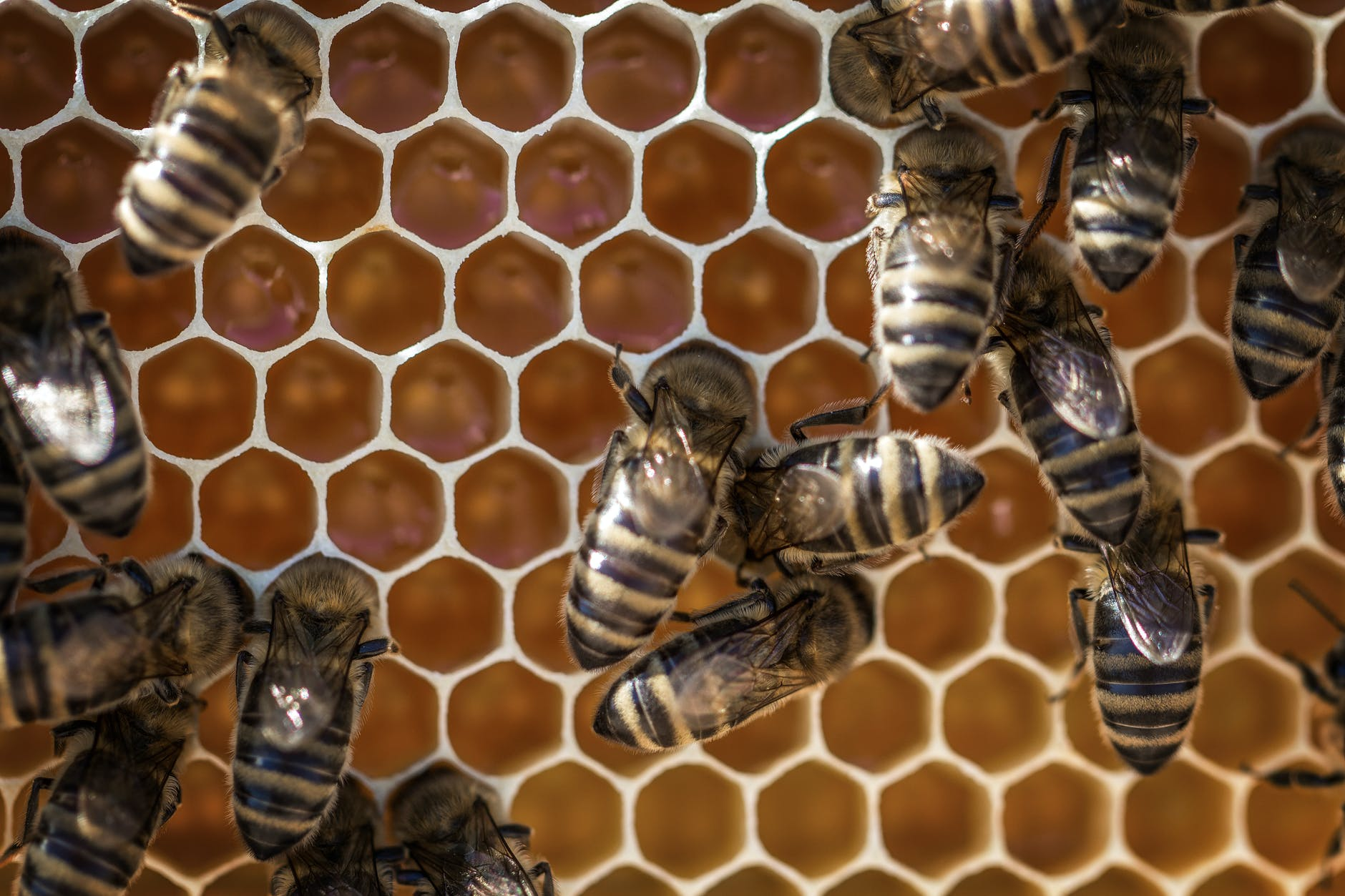 Photo by David Hablu00fctzel on Pexels.com