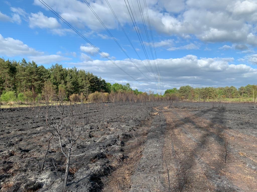 Burnt heathland Brentmoor Heath (c)Surrey Wildlife Trust
