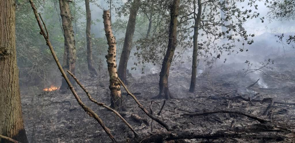 fire-at-the-closed-charnwood-lodge-nature-reserve-2-c-leicestershire-rutland-wildlife-trust